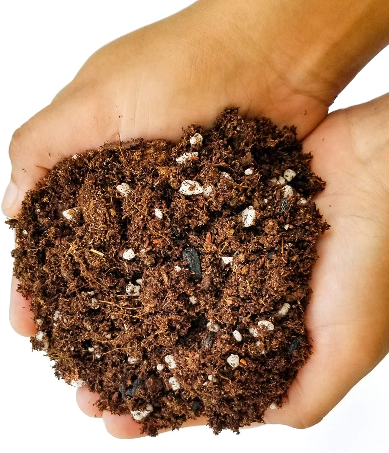 Best succulent soil for growth
