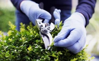 best-garden-shears